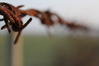 Macro rusted barbed wire