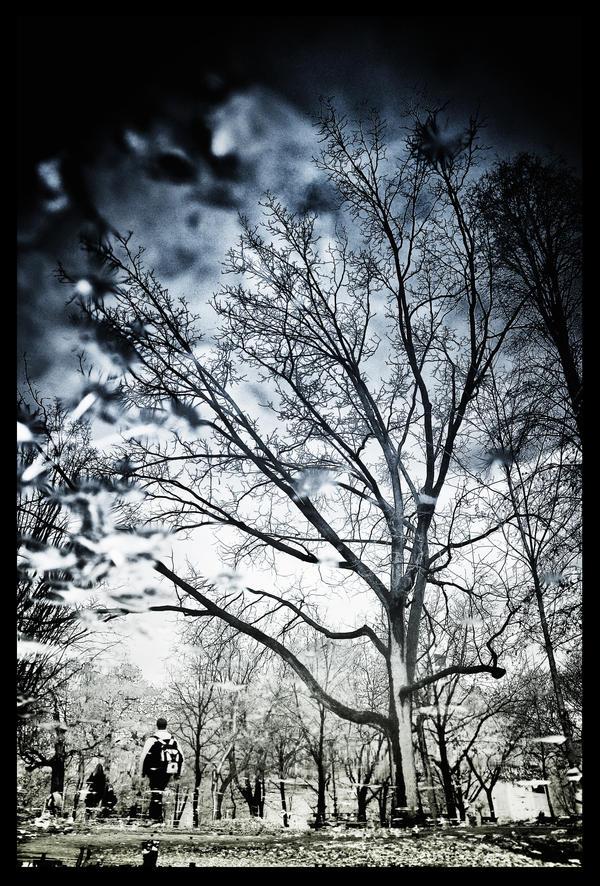 Echo of Winter by rh89 - K�� *
