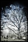 Echo of Winter