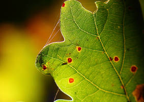 Oak Leaf by JetteReitsma
