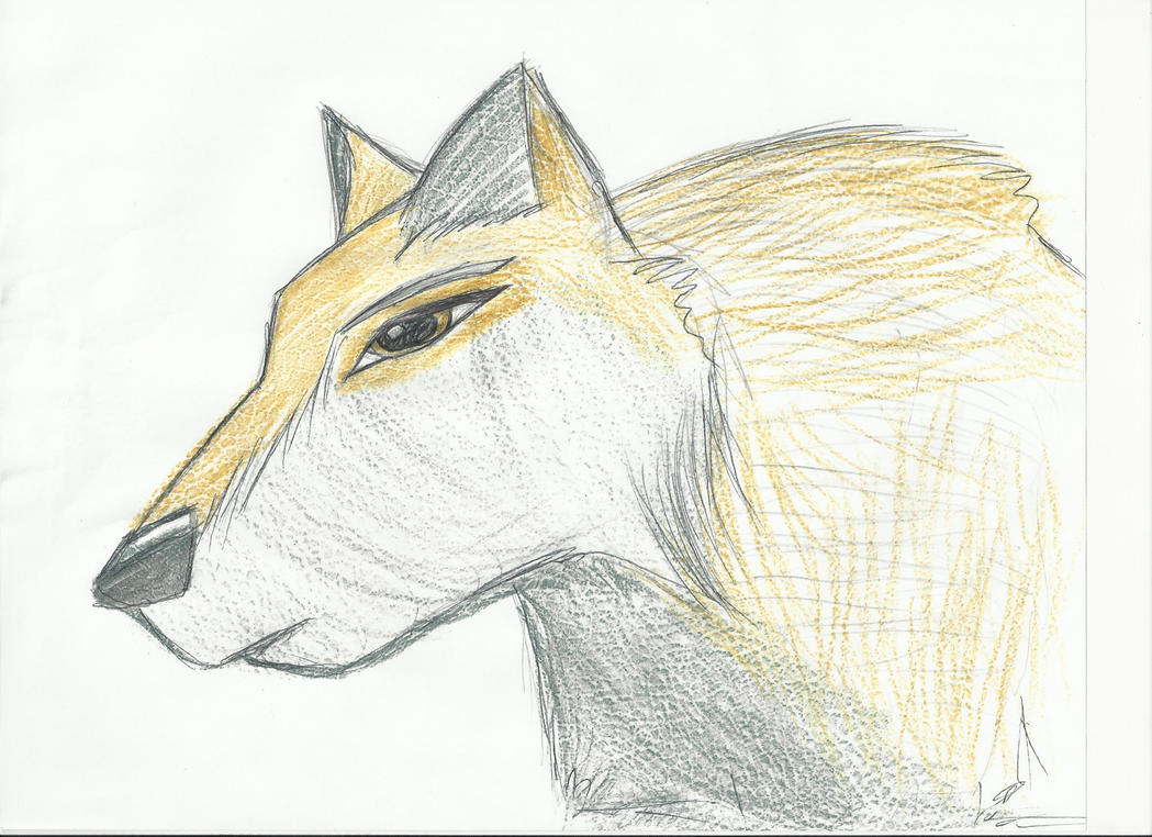 Gold wolf by Glamrgrl104
