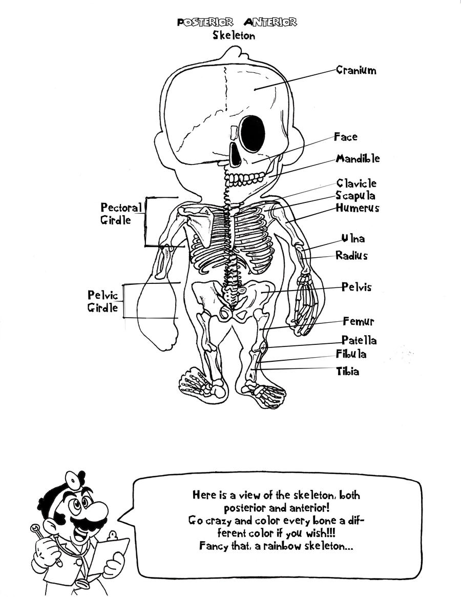 Skeletal System Anatomy Coloring Book Coloring Pages