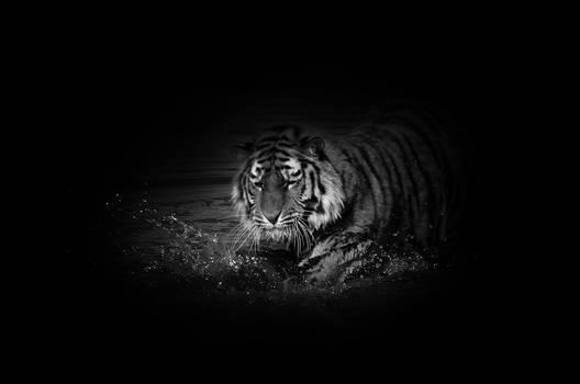 Tiger V