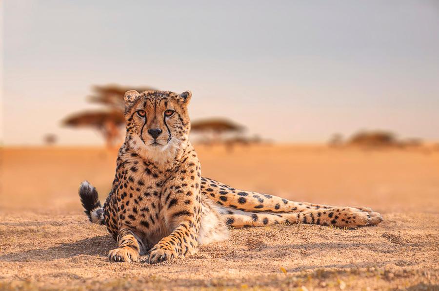 Serengeti by werram