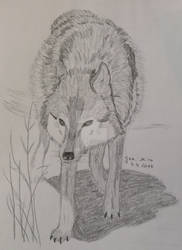 The protecting wolf