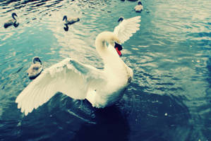 Swan lake by willow02061982