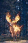 Deer on Fire
