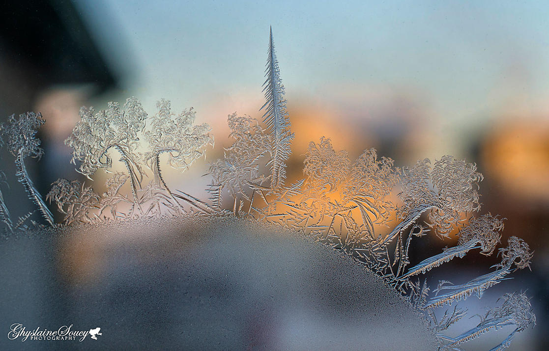 Frosted forest by gigi50