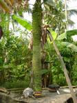 BANANA TREE2011