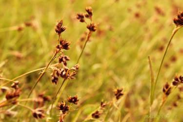 meadow by madnesstree