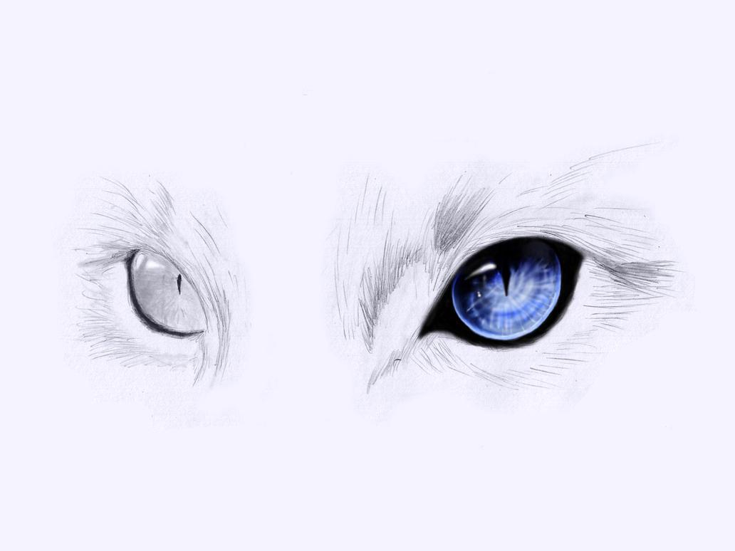 Cat Eyes by onewayprophet on DeviantArt