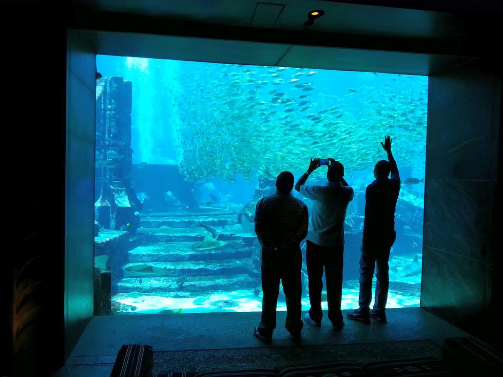 The Lost Chambers Aquarium - Atlantis, Dubai by rascy
