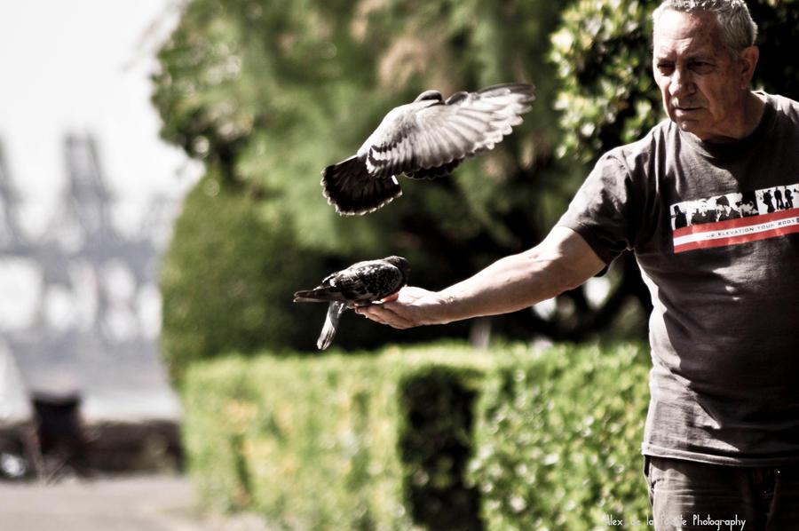 bird eating in oldman hand by shugo-89