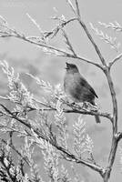 Birdsong by Dave-D