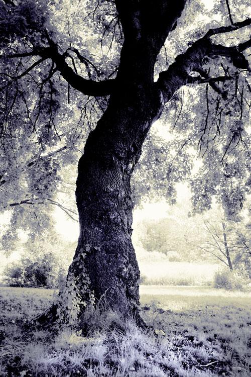The Fairy Tree by photodust
