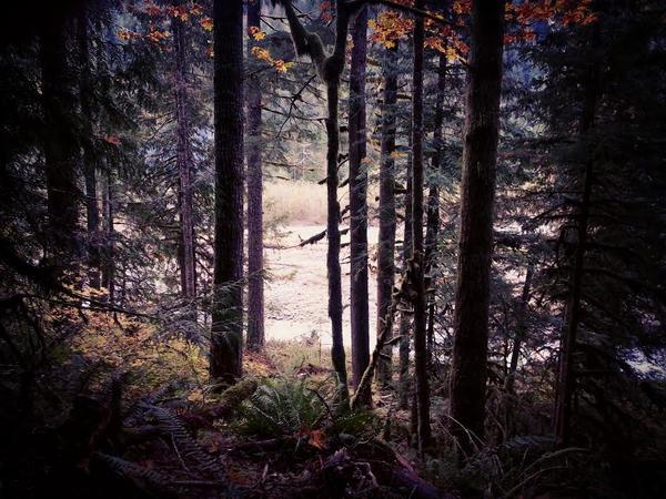 Autumn Mysteries by photodust