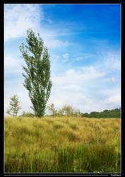 A single tree by StephArt09