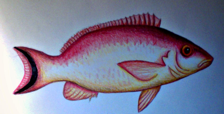 Colour Drawing Fish By Sarahstar123 On Deviantart Colour Drawing