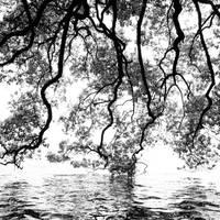 Conversation between tree and lake