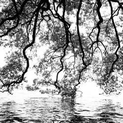 Conversation between tree and lake by PansaSunavee