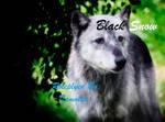 Black Snow- My new OCC