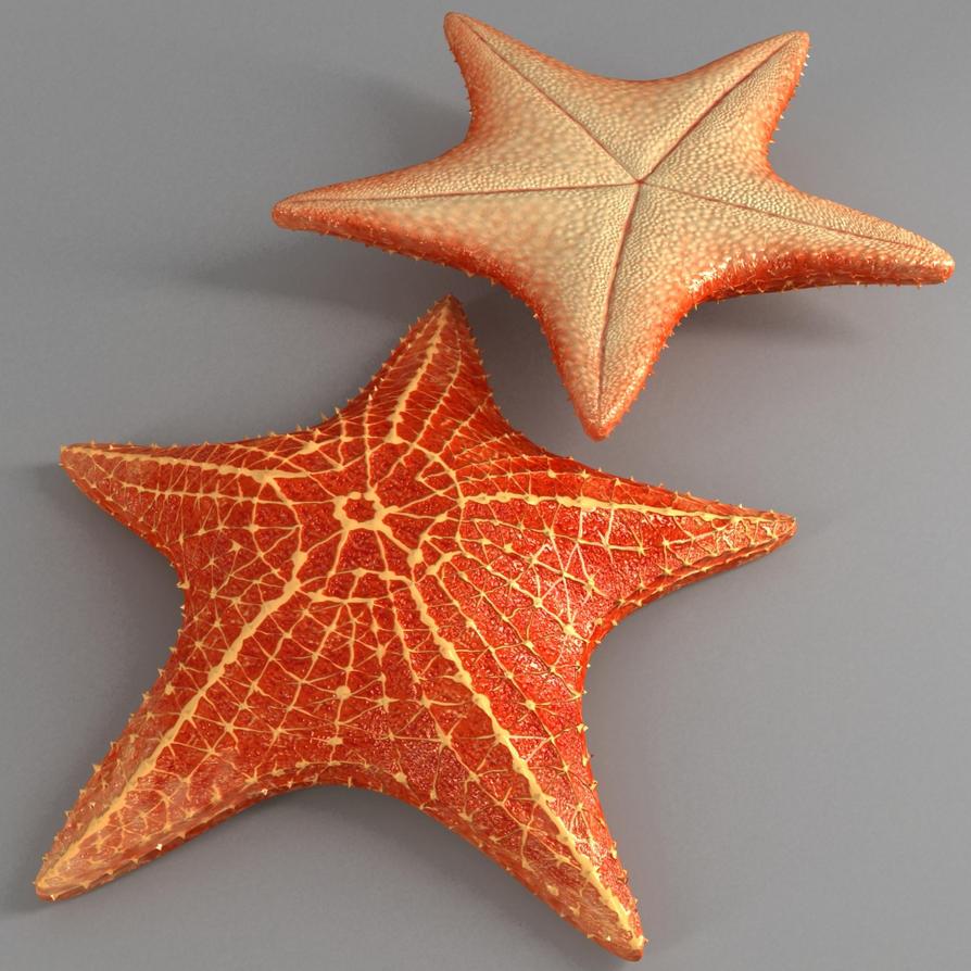 starfish Cushion speci...