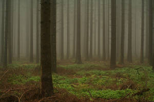 The Misty Woods by PeterK