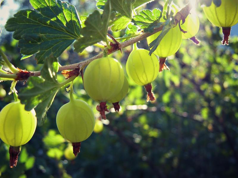 lime green by miss-gardener
