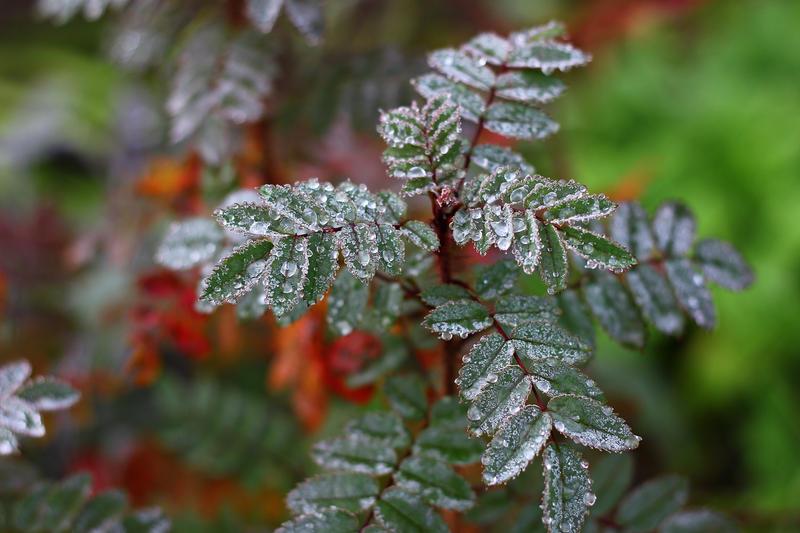 frozen garden II by miss-gardener