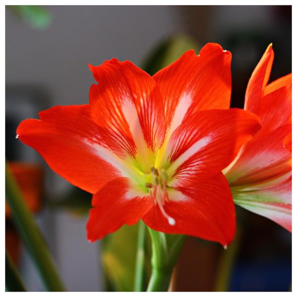 season's colour by miss-gardener