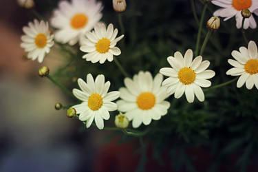 the dreamers II by miss-gardener