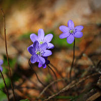 loveable by miss-gardener