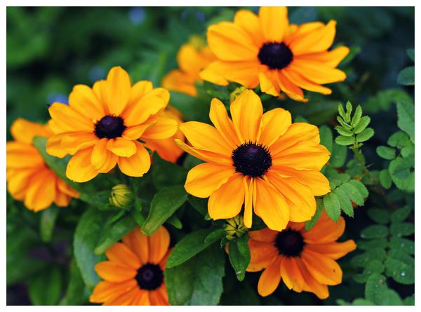 midsummer's golden by miss-gardener