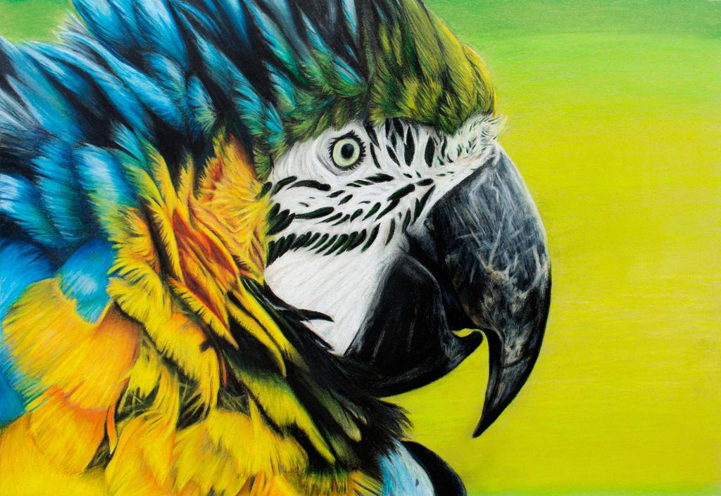 Macaw by BeeZee-Art
