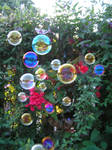 bubbles in my garden