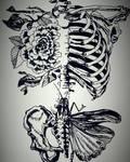 AnatomiX