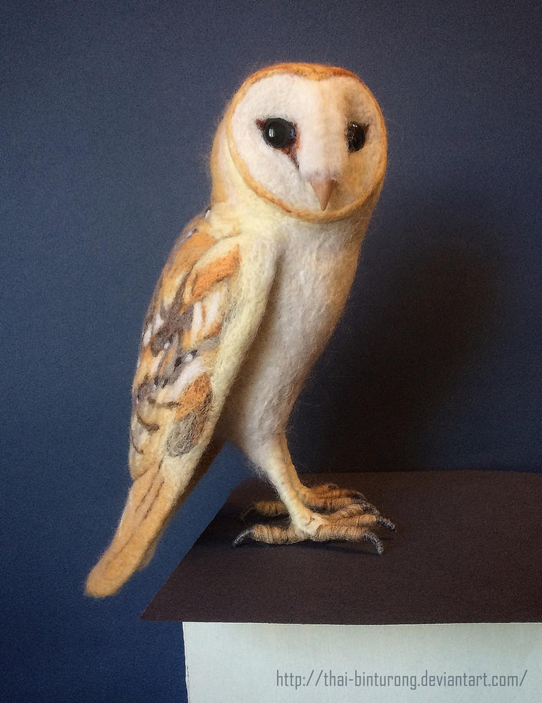 Barn Owl by thai-binturong