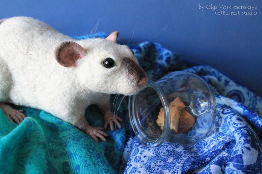 Siamese rat by thai-binturong