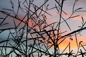 branches by romanticxpoetry