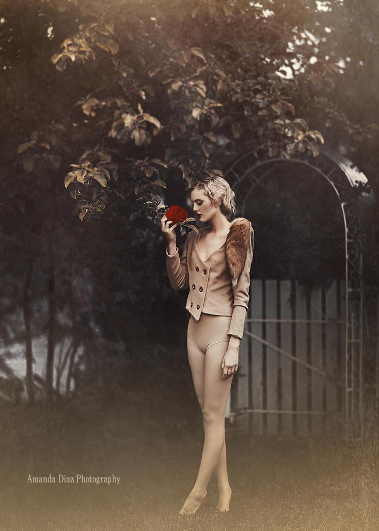 The Last Rose by Amanda-Diaz