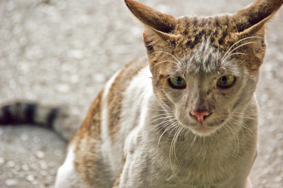 Cat Under Door Gif