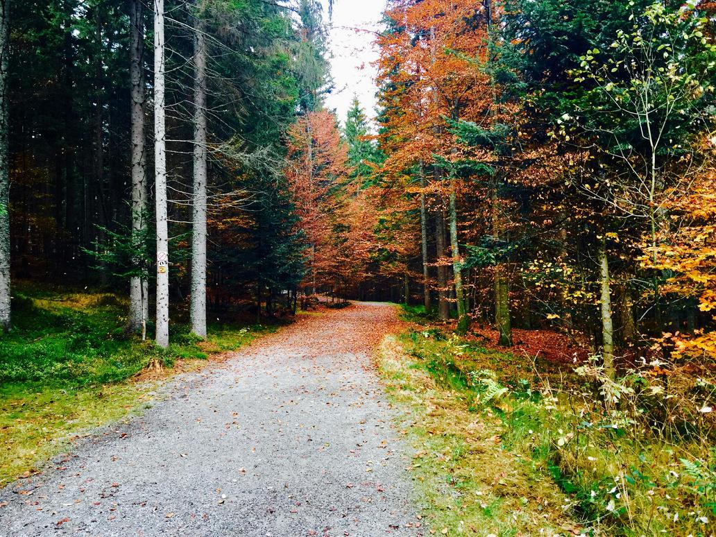 Path by Sergiu244