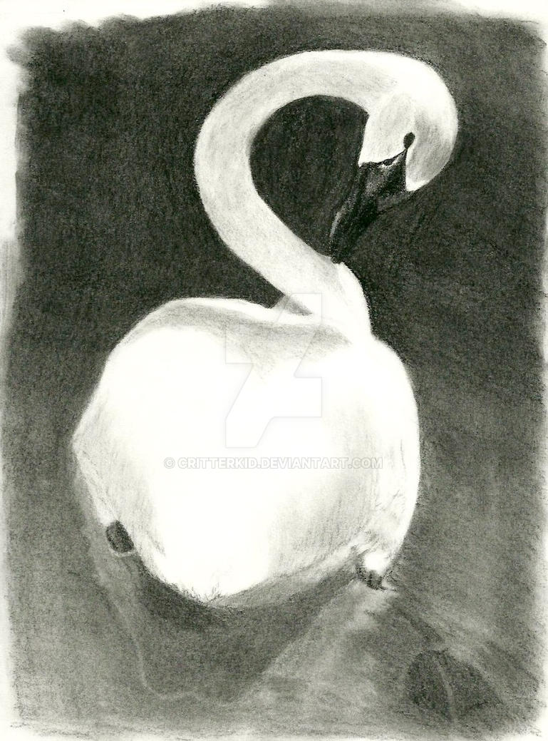 Swan Charcoal by CritterKid