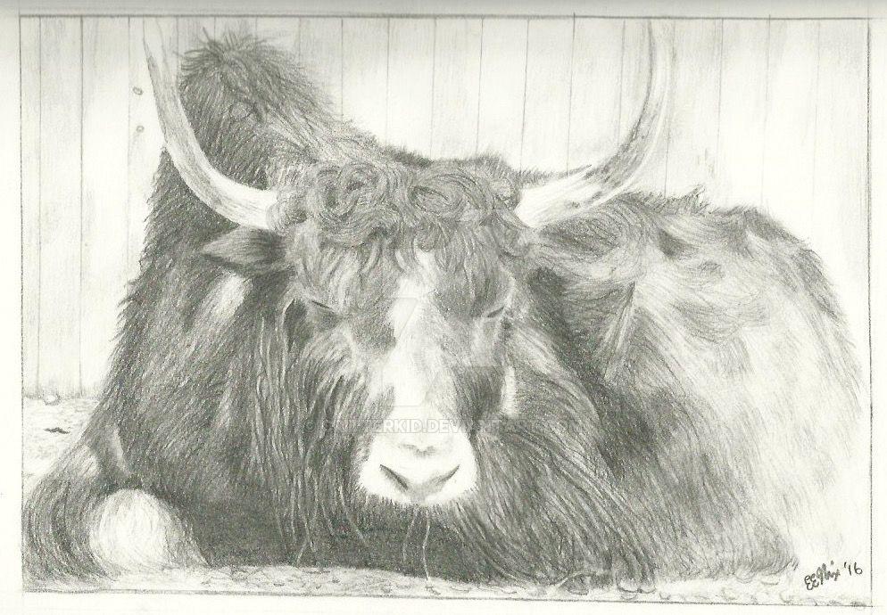 'Sunbathing Yak,' pencil, 8'' x 11'', 2016 by CritterKid