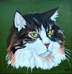 Cat Portrait- norwegian forest cat