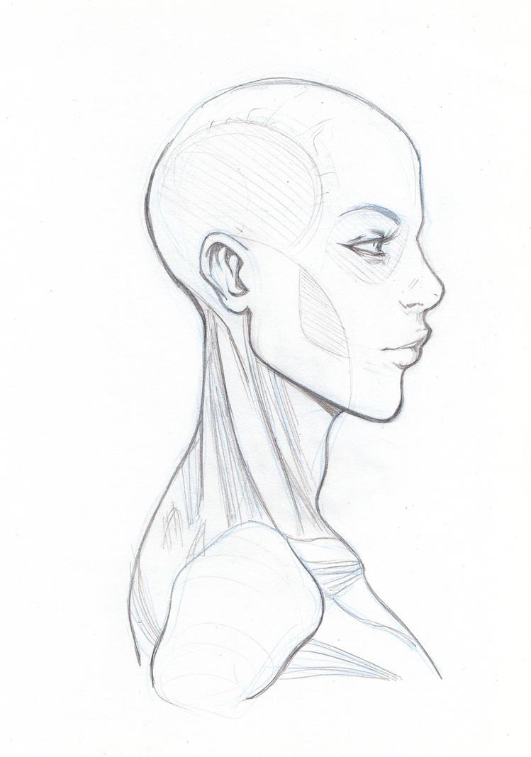 Skullneck Anatomy By Marc F Huizinga On Deviantart