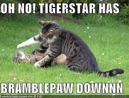 Tigerstar and Bramblepaw by silverflame29