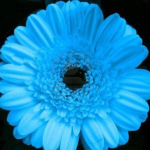 Nemiflora's Profile Picture