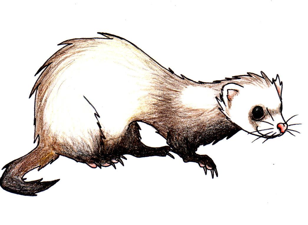 ferret by spaffi on deviantart weasel face clipart weasel face clipart