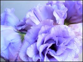 Violet by selfexplanatory